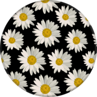 Daisies_front-300x300_grande